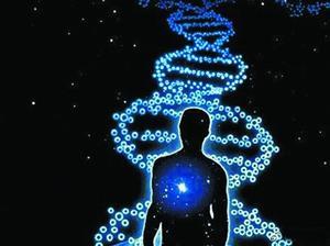 """新研究用DNA分子組裝類生命""""軟機器人"""""""