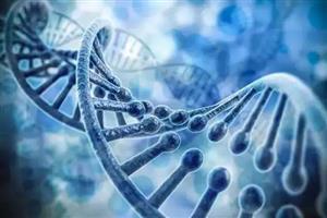 "RNA干扰被发现是人类神经早期发育的""保护伞"""