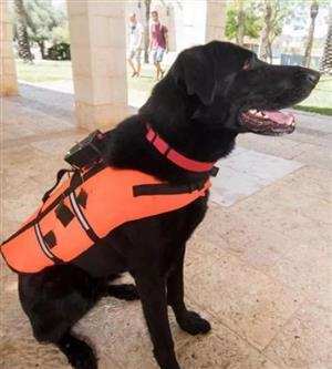 以色列新研究可用触觉背心训练狗