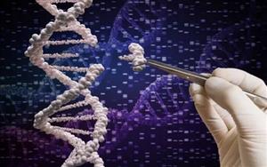 CRISPR驱动的基因激活技术可预防肌营养不良