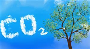 """""""人工樹葉""""讓二氧化碳變廢為寶"""