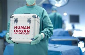 苏黎世大学专家发明新仪器可使肝脏体外存活7天并修复损伤