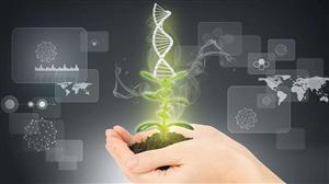 我科学家建立高效植物引导基因编辑系统