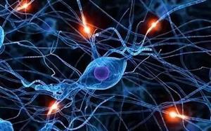 """人类多能干细胞培养出皮肤""""类器官"""""""