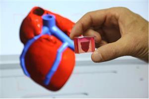 德国拜耳将使用以色列3D打印的人体心脏组织测试新药