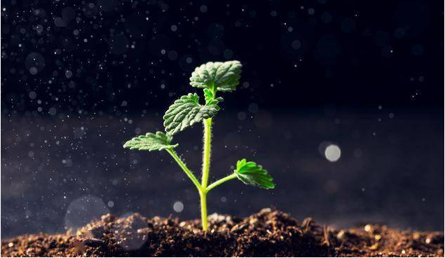 """南洋理工大学开发""""植物语言翻译器"""",还能控制植物行为"""